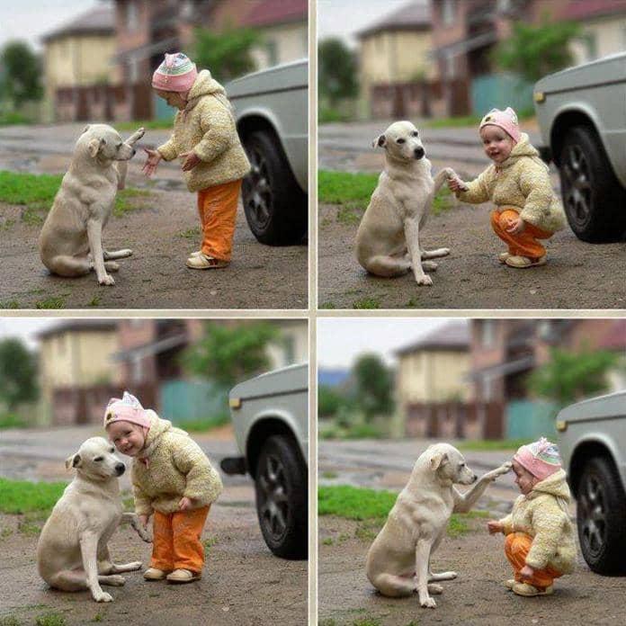 Amizades verdadeiras entre os cães e as crianças 5