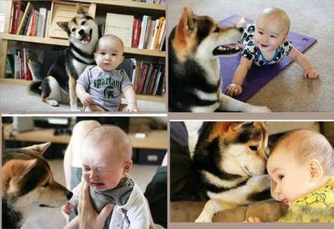Amizades verdadeiras entre os cães e as crianças 3
