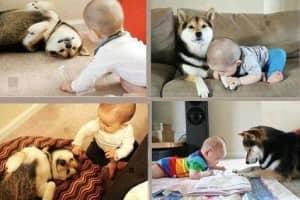 Amizades verdadeiras entre os cães e as crianças 1