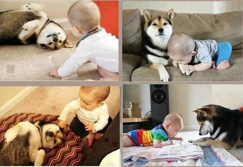 Amizades verdadeiras entre os cães e as crianças 6