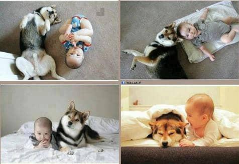 Amizades verdadeiras entre os cães e as crianças 2