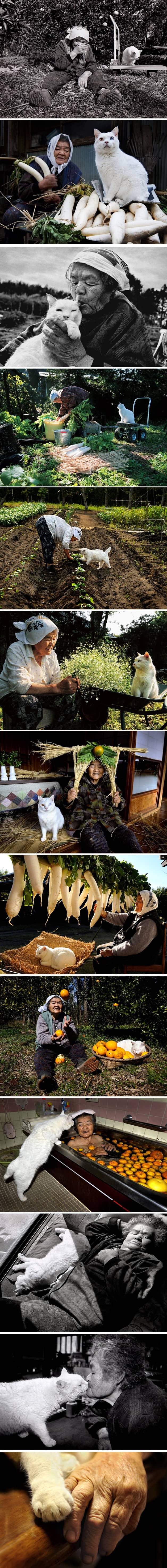 Série documenta a história de amor entre uma mulher e um gato resgatado das ruas 4