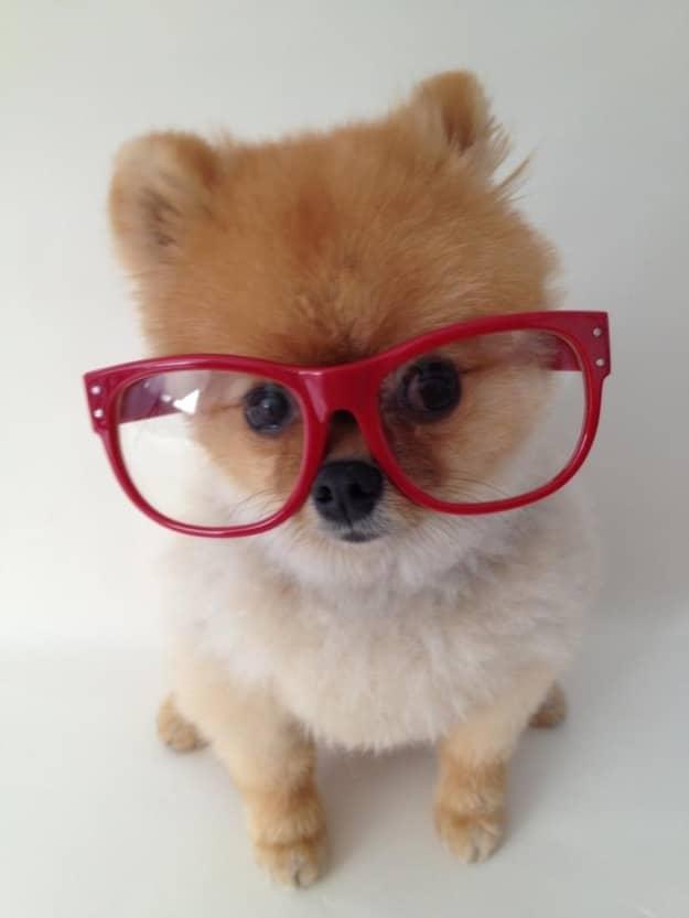 Conheçam Jiff, um cachorro muito de bem com a vida 12