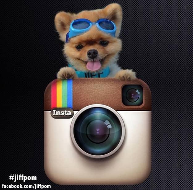 Conheçam Jiff, um cachorro muito de bem com a vida 4