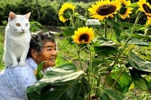 Série documenta a história de amor entre uma mulher e um gato resgatado das ruas 1