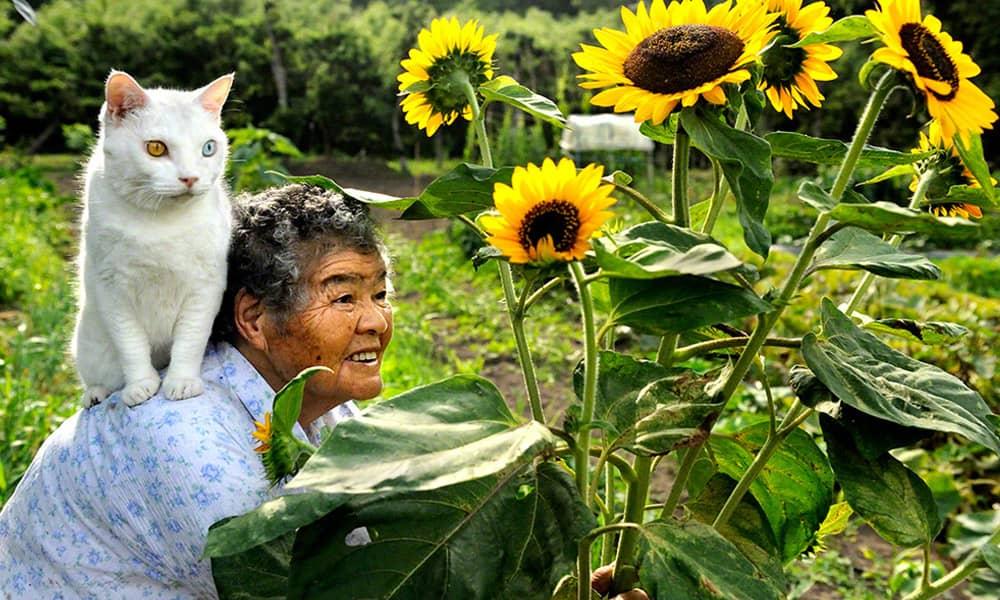 Série documenta a história de amor entre uma mulher e um gato resgatado das ruas 5
