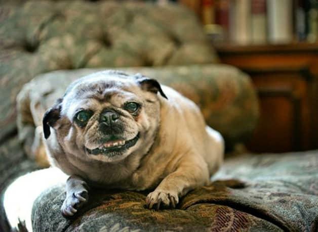 Fotógrafa faz projeto registrando imagens de cães idosos 5