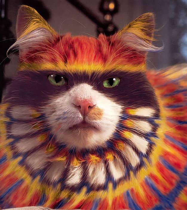 Livro reúne série de fotos com gatos pintados 5