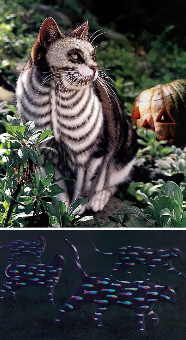 Livro reúne série de fotos com gatos pintados 1