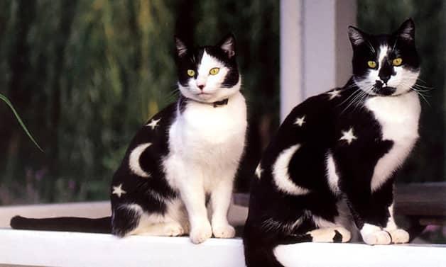 Livro reúne série de fotos com gatos pintados 3