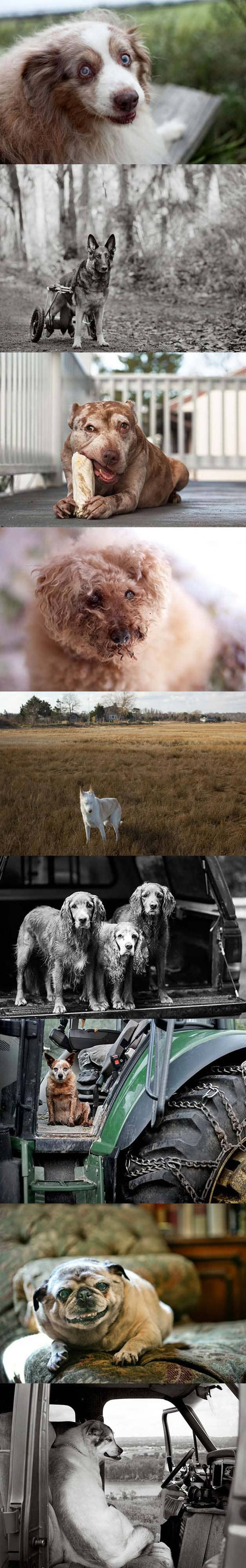 Fotógrafa faz projeto registrando imagens de cães idosos 2