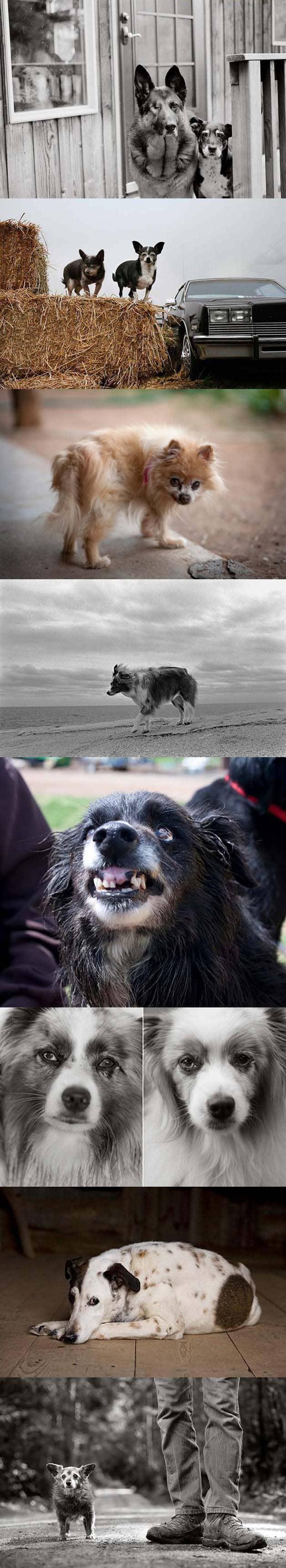 Fotógrafa faz projeto registrando imagens de cães idosos 3