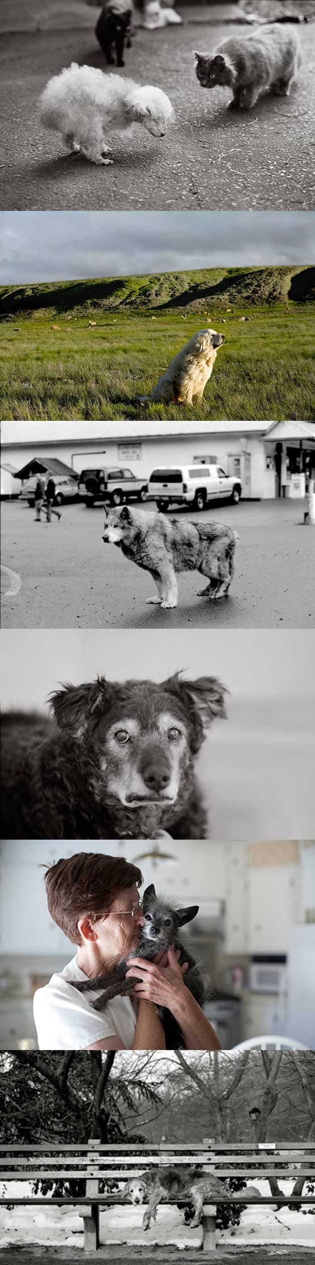 Fotógrafa faz projeto registrando imagens de cães idosos 4