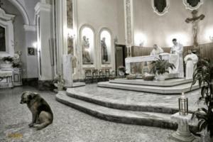 Após morte da dona, cão vai diariamente a missa 2