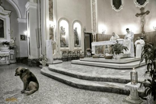Após morte da dona, cão vai diariamente a missa 5