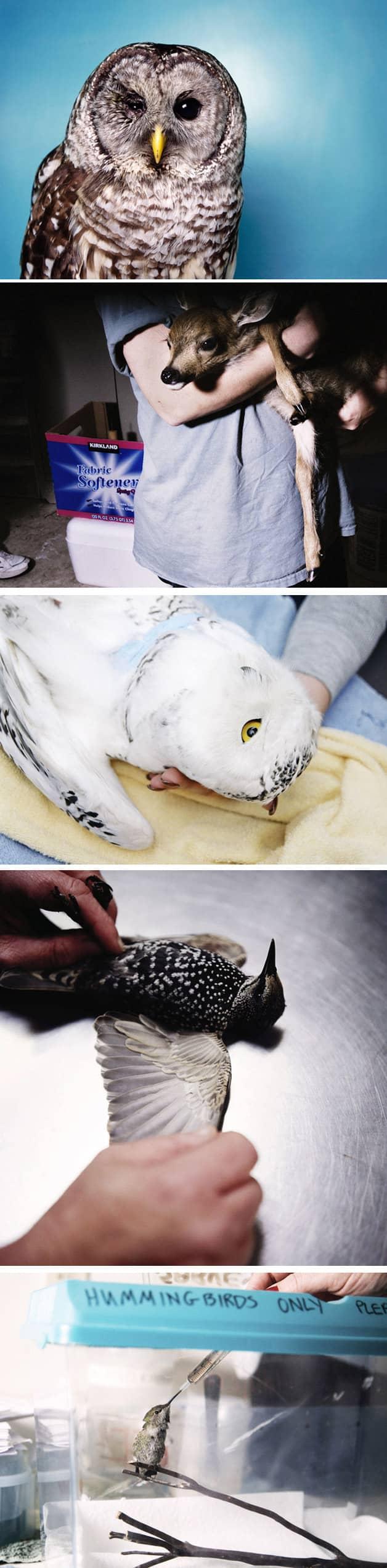 Ajudando animais feridos, fotógrafa percebe o quanto somos parecidos com eles 4