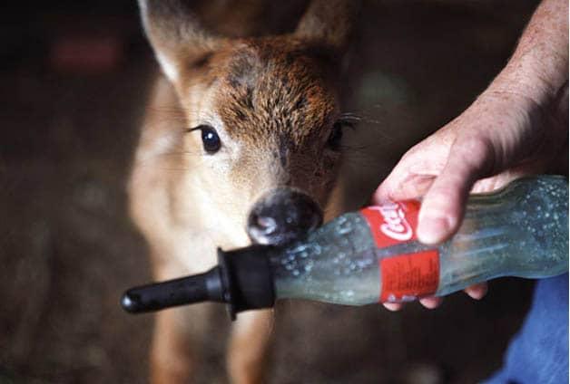 Ajudando animais feridos, fotógrafa percebe o quanto somos parecidos com eles 5