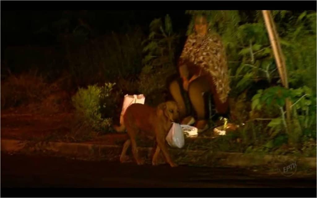 Cadela Lilica enfrenta perigos de rodovia para alimentar outros animais 2