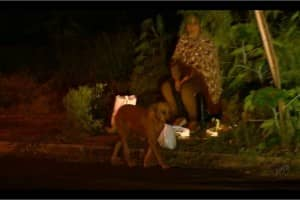 Cadela Lilica enfrenta perigos de rodovia para alimentar outros animais 5