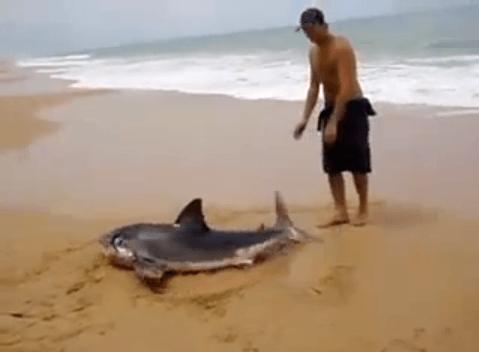 Homem arrisca a vida para salvar tubarão encalhado na praia 3