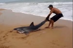 Homem arrisca a vida para salvar tubarão encalhado na praia 12
