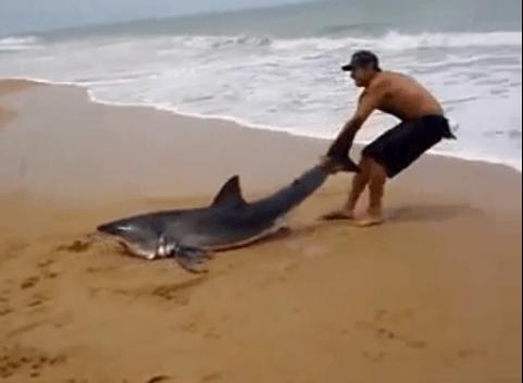 Homem arrisca a vida para salvar tubarão encalhado na praia 7