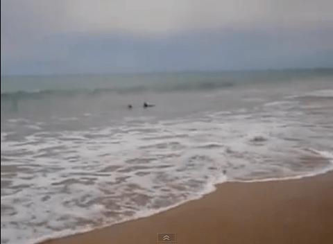 Homem arrisca a vida para salvar tubarão encalhado na praia 6