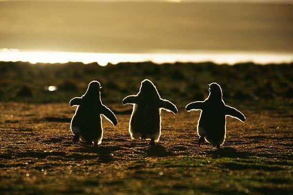 Filhotes de diversas espécies mostram bons motivos para proteger o meio ambiente 6