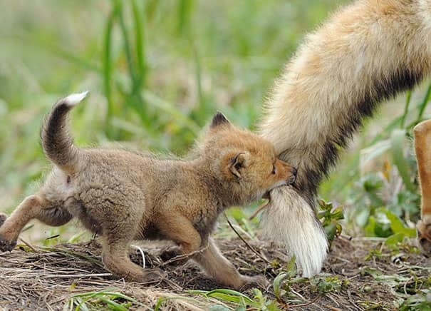 Filhotes de diversas espécies mostram bons motivos para proteger o meio ambiente 8