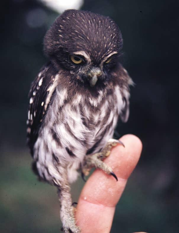 Filhotes de diversas espécies mostram bons motivos para proteger o meio ambiente 18