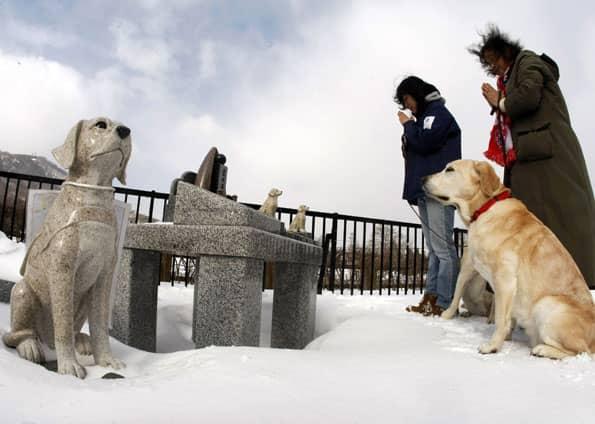 Japão tem asilo para cães-guias aposentados 4