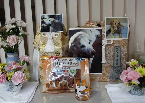 Japão tem asilo para cães-guias aposentados 5