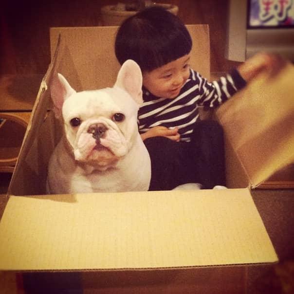 Criança japonesa com seu amigo Bulldog mostram amizade verdadeira e muito fofa! 7