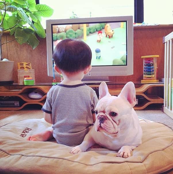 Criança japonesa com seu amigo Bulldog mostram amizade verdadeira e muito fofa! 11
