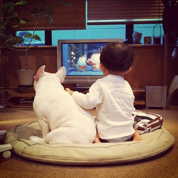 Criança japonesa com seu amigo Bulldog mostram amizade verdadeira e muito fofa! 12