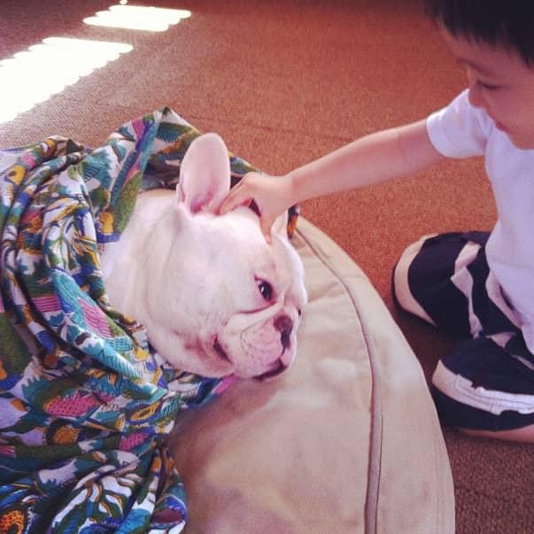 Criança japonesa com seu amigo Bulldog mostram amizade verdadeira e muito fofa! 14