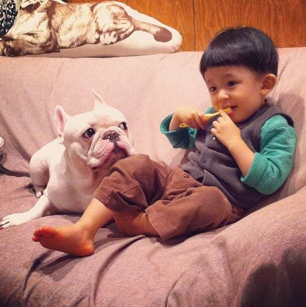 Criança japonesa com seu amigo Bulldog mostram amizade verdadeira e muito fofa! 17