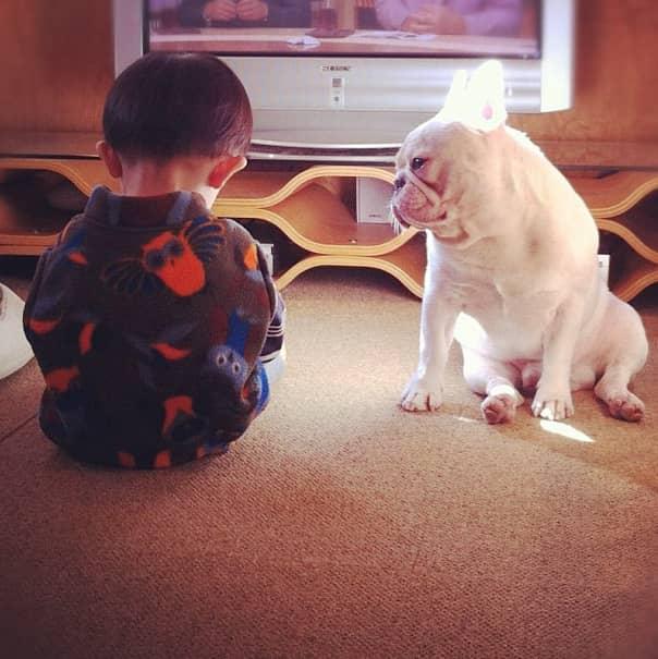 Criança japonesa com seu amigo Bulldog mostram amizade verdadeira e muito fofa! 4