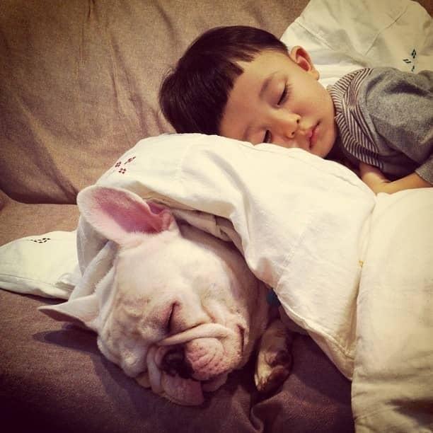 Criança japonesa com seu amigo Bulldog mostram amizade verdadeira e muito fofa! 5