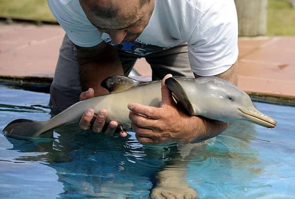 Filhotes de diversas espécies mostram bons motivos para proteger o meio ambiente 14