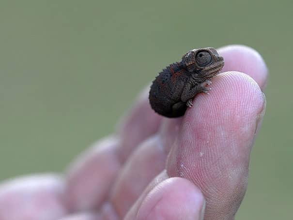 Filhotes de diversas espécies mostram bons motivos para proteger o meio ambiente 15