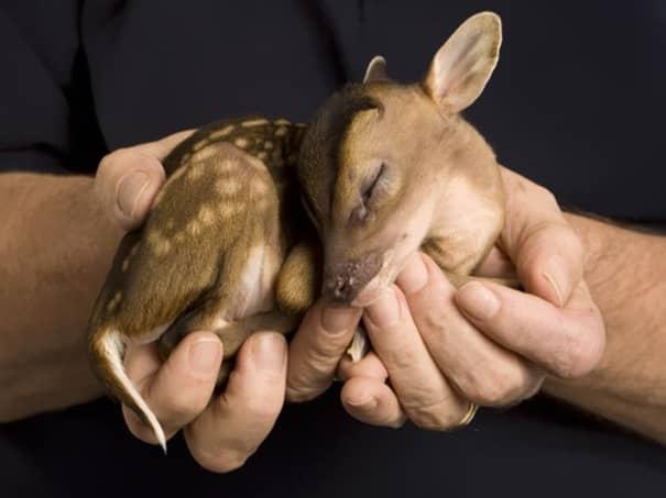 Filhotes de diversas espécies mostram bons motivos para proteger o meio ambiente 17