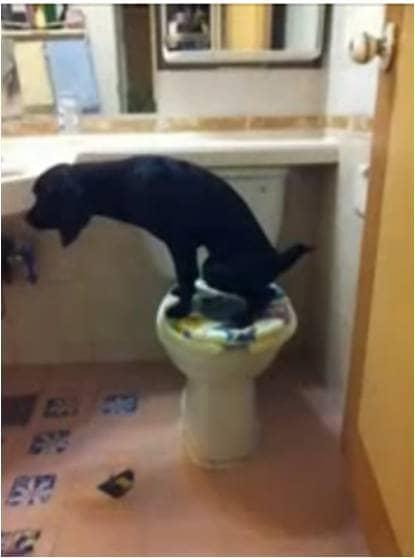Cãozinho faz suas necessidades no banheiro 3