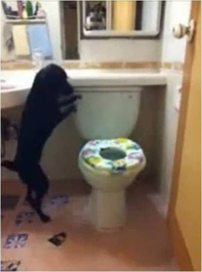 Cãozinho faz suas necessidades no banheiro 2