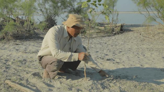 Indiano planta sozinho uma floresta equivalente a 550 campos de futebol 3