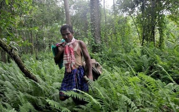 Indiano planta sozinho uma floresta equivalente a 550 campos de futebol 5