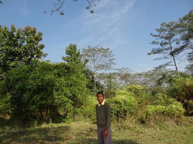 Indiano planta sozinho uma floresta equivalente a 550 campos de futebol 6