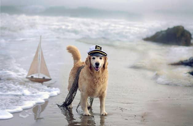 Com vocês, Champ, um cãozinho que tem uma vida pra lá de divertida! 13