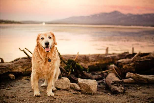 Com vocês, Champ, um cãozinho que tem uma vida pra lá de divertida! 4