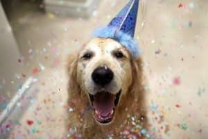 Com vocês, Champ, um cãozinho que tem uma vida pra lá de divertida! 3